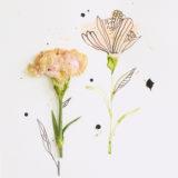 January Birth Flower: Carnation