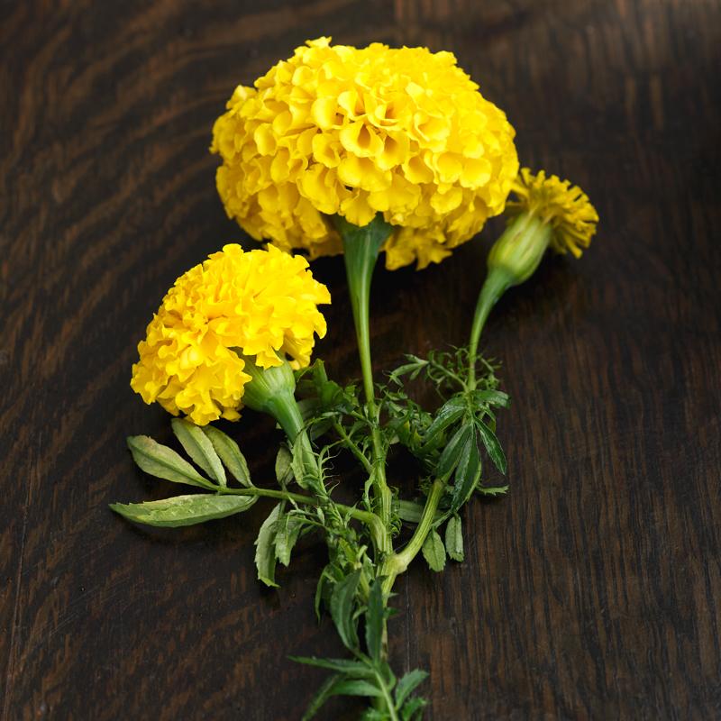 October Birth Flower - Marigold