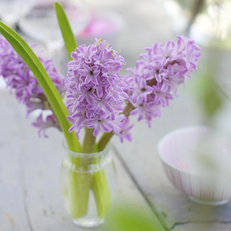 July Birth Flower - Larkspur