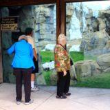 Zoo Polar Bear Exhibit