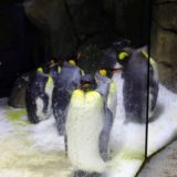 Penguins at the zoo.
