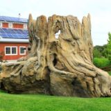 Tree stump playground at the Kansas City Zoo.